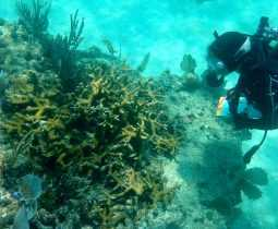 Diver taking notes near coral reef