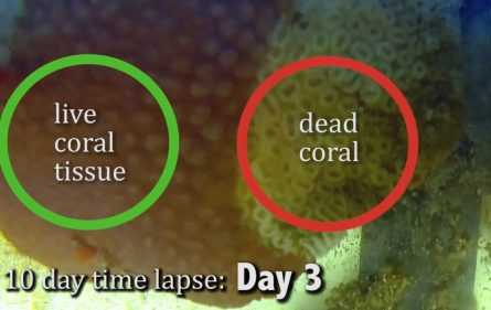 Comparison between coral