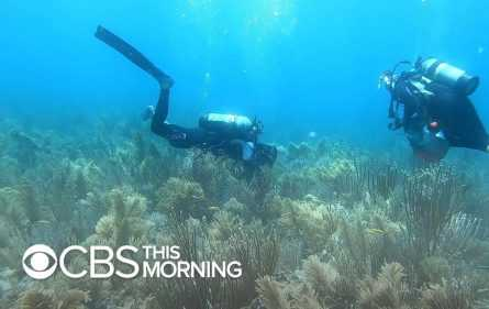 Scuba divers looking at coral