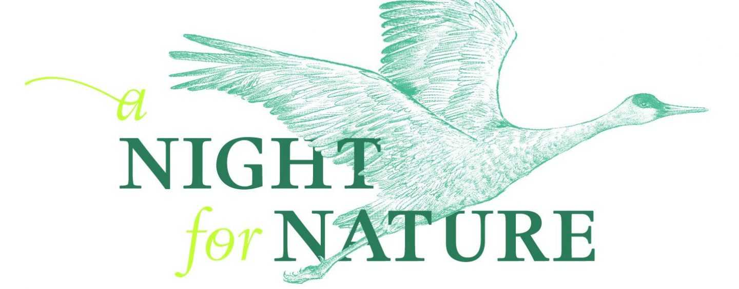 A Night For Nature Logo